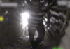 En Hizbollah-terrorist blev filmet inde i en angrebstunnel nedgravet fra Libanon og ind til Israel. Tunnelen blev ødelagt. (Foto: IDF)
