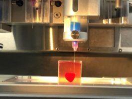 Israelske forskere har formået at 3D-printe det første hjerte. Testhjertet er på størrelse med et kaninhjerte. (Foto: Tal Dvir)